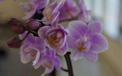 日比谷花壇のお正月